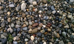 Over 10,000 rivers and streams flow down from the Olympic and Cascade Mountains eventually into the salt water Puget Sound. Along with all that comes an amazing variety of rocks and their colors that finally wash up on the beach.
