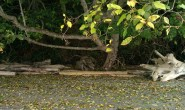 """Here's another little """"cave"""" where the water comes all the way up under the trees when the tide is in."""