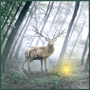 the-deer-and-the-light