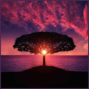 Elightened Tree
