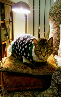 Todd in the Sweater of Shame