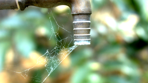 scarcity-drought-spider-web-water-spout